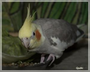 quaeki5